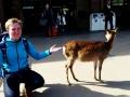 Not a very photogenic deer:写真あまり好きじゃない鹿だ