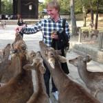 Tame deers in the street of Nara