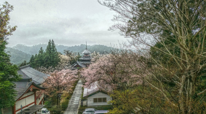 Beautiful cherry blossom in Yoshino